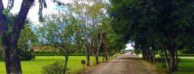 Floricultura Cemitério Jardim das Flores - Cotia