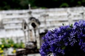 Floricultura Cemitério Parque Municipal Sangão Criciúma - SC