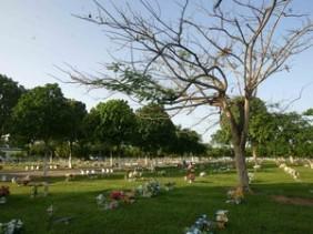 Floricultura Cemitério Parque da Paz – Maceió – AL