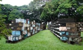 Floricultura Cemitério Municipal de Maringá - PR