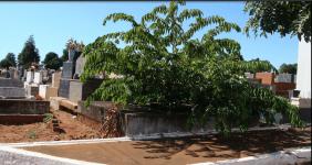 Floricultura  Cemitério da Candongas Uberaba - MG
