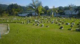 Floricultura Cemitério Parque Crisântemos Itajaí – SC