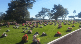 Floricultura Cemitério Parque Jardim do Eden Chapecó - SC