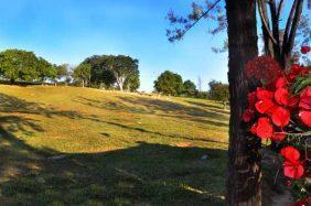 Floricultura Cemitério da Consolação - MG