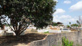 Floricultura Cemitério Municipal de Uruará- PA