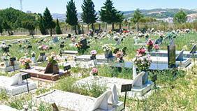 Floricultura Cemitério Municipal de Álvares Florence – SP