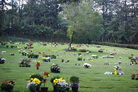 Floricultura Cemitério Municipal de Álvares Machado – SP