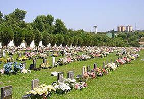 Floricultura Cemitério Municipal de Holambra – SP