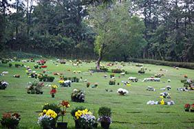 Floricultura Cemitério Municipal de Igaraçu do Tietê – SP