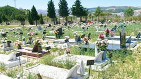 Floricultura Cemitério Municipal de Pedranópolis – SP